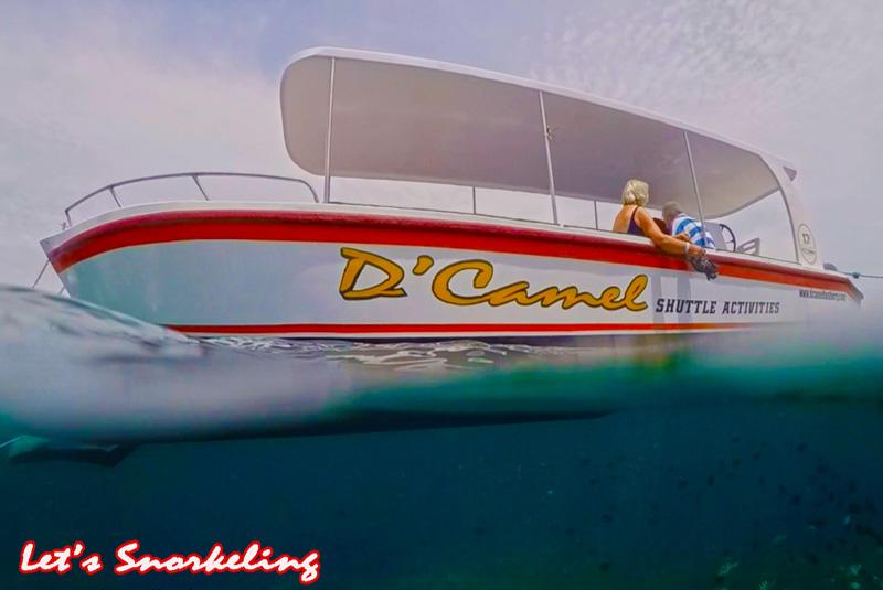 snorkeling d'camel